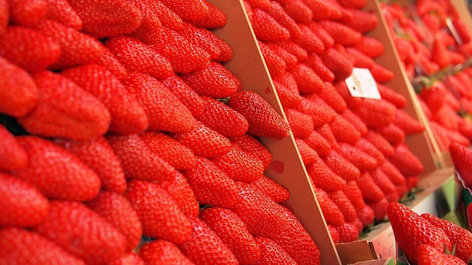 Open market in Agribusiness