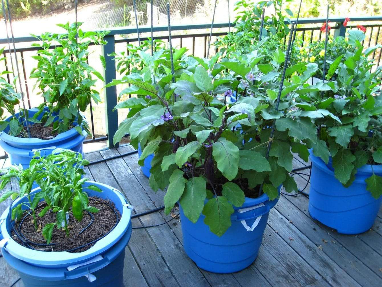 12 Best Vegetables for Container Gardening Infographic