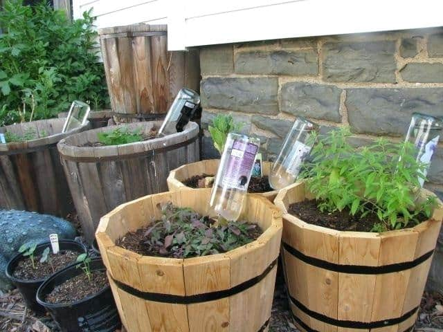 Automatic Plant Watering System DIY