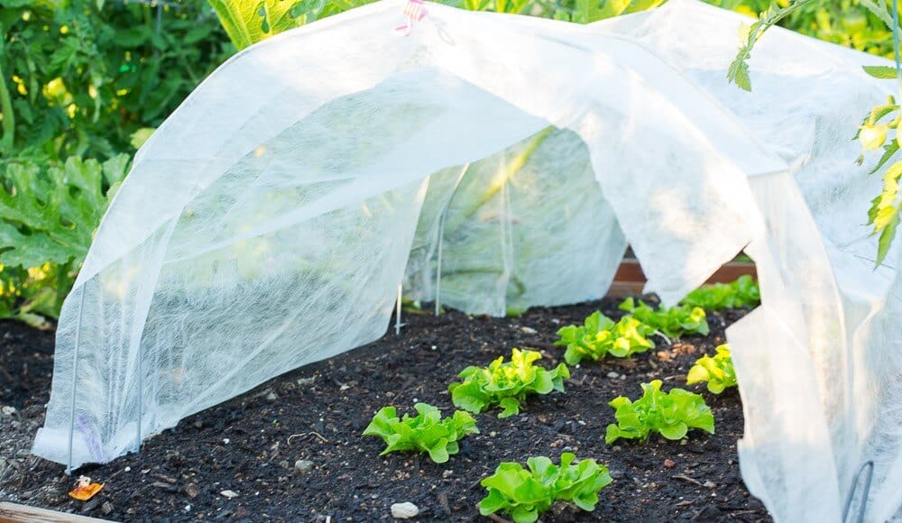 3 Quick Winter Gardening Tips for Zones 4 to 9