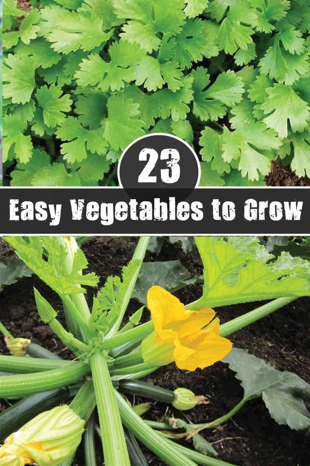 Tasty Vegetables That Are Easy to Grow for Beginners