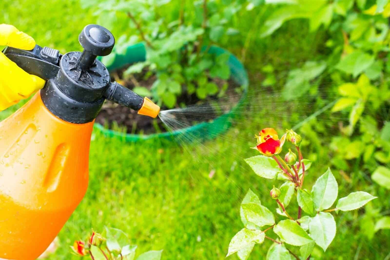 Best Vegetable Garden Insect Spray with Spinosad