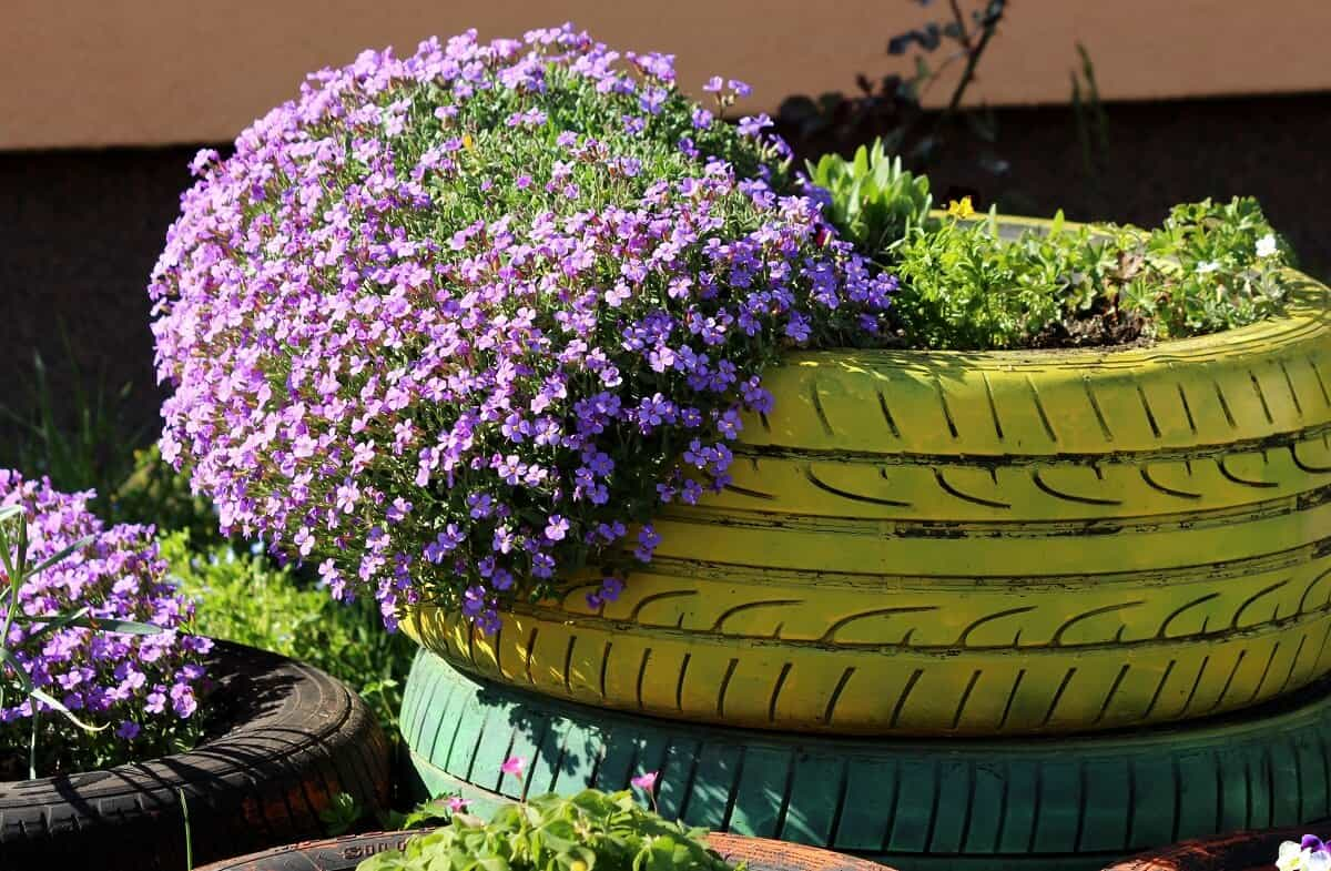 Best ground cover plants - Creeping phlox on stylish old tyre