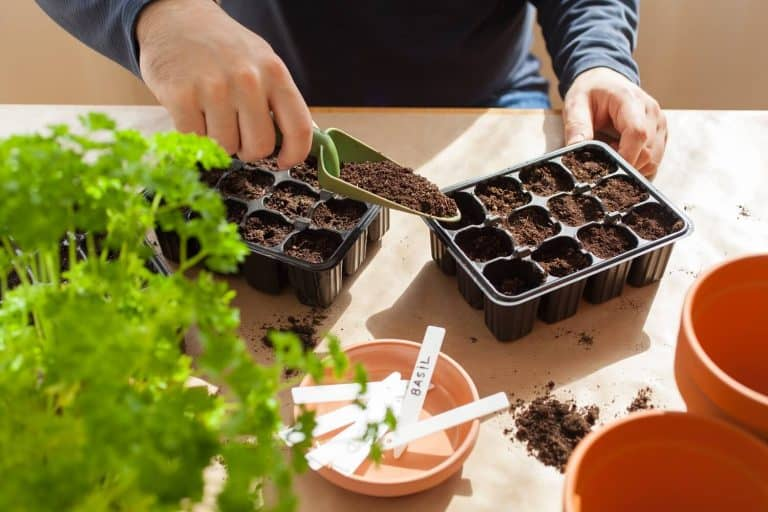 How to Sow Seeds Indoors – Step by Step